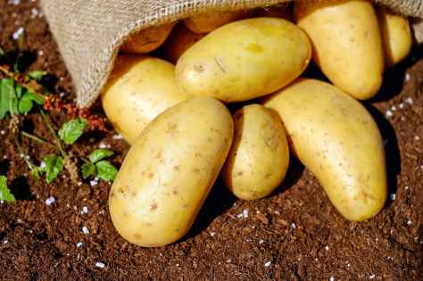 potatoes-vegetables-erdfrucht-bio-144248.jpeg