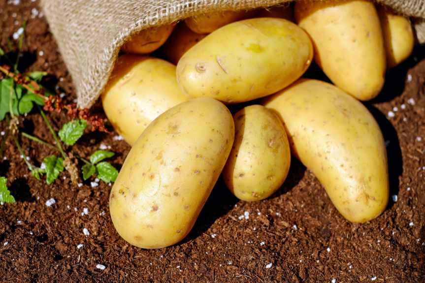 potatoes-vegetables-erdfrucht-bio-144248.jpeg