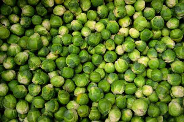 brussels-sprouts-sprouts-cabbage-grocery-41171.jpeg