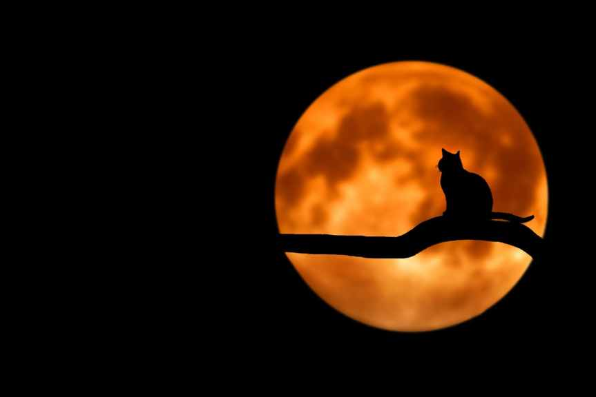 Spooky Second Fall Moon in October – The Halloween Hunter's Moon