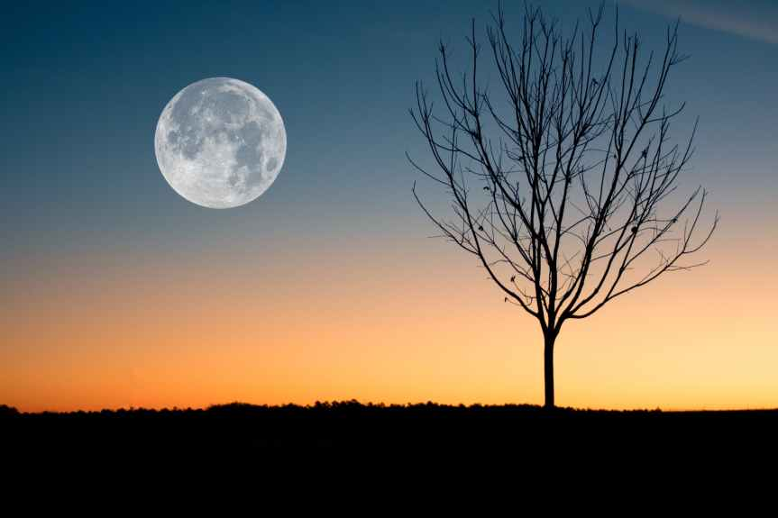 4 Facts About the Full Wolf Moon Tonight | Leverage Ambition