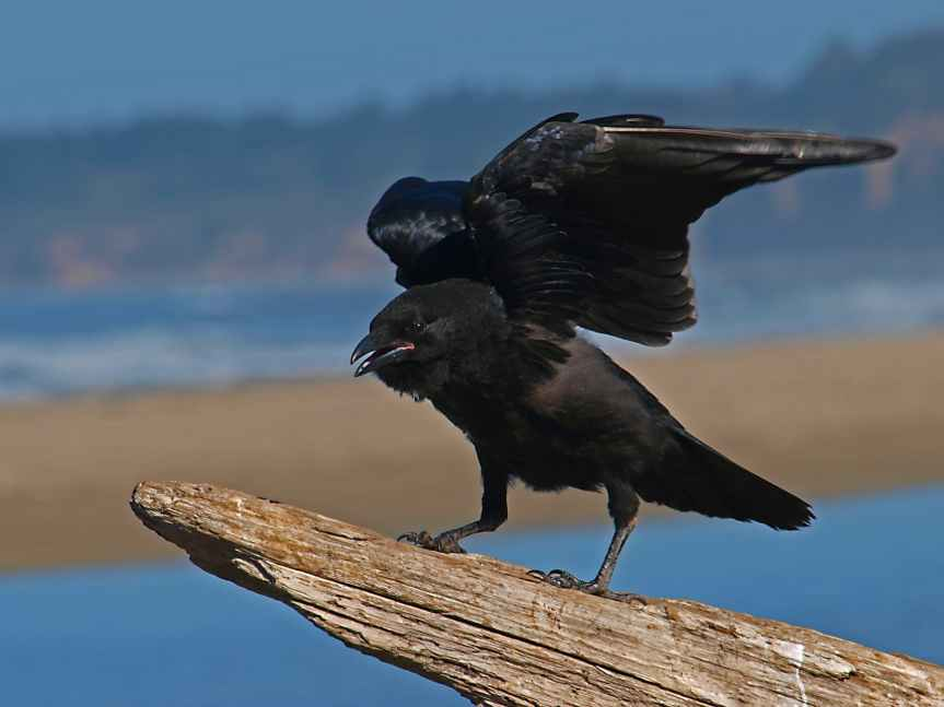 5 Crows That Bother Me | LeverageAmbition